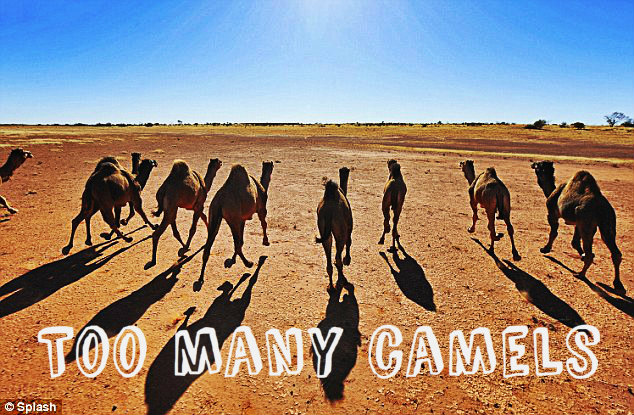 Too Many Camels