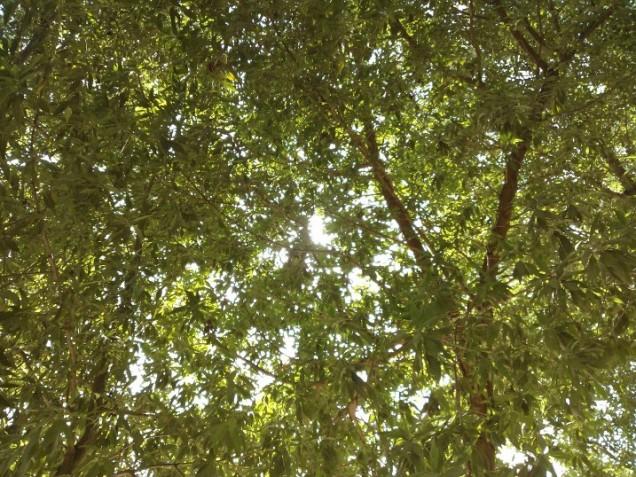 Tree So Green