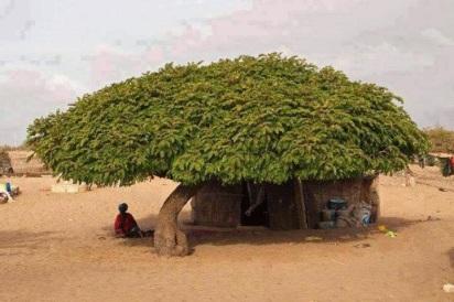 woderful_tree_punjab_simple_village_life_hd_photos_06-729674