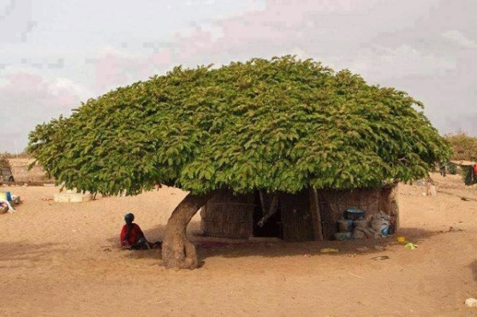 woderful_tree_punjab_simple_village_life_hd_photos_06-729674