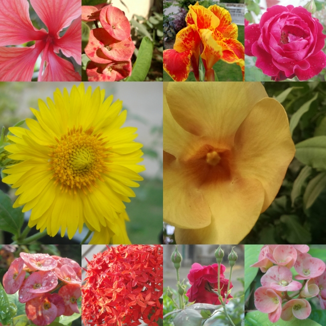 floral_collage.jpg