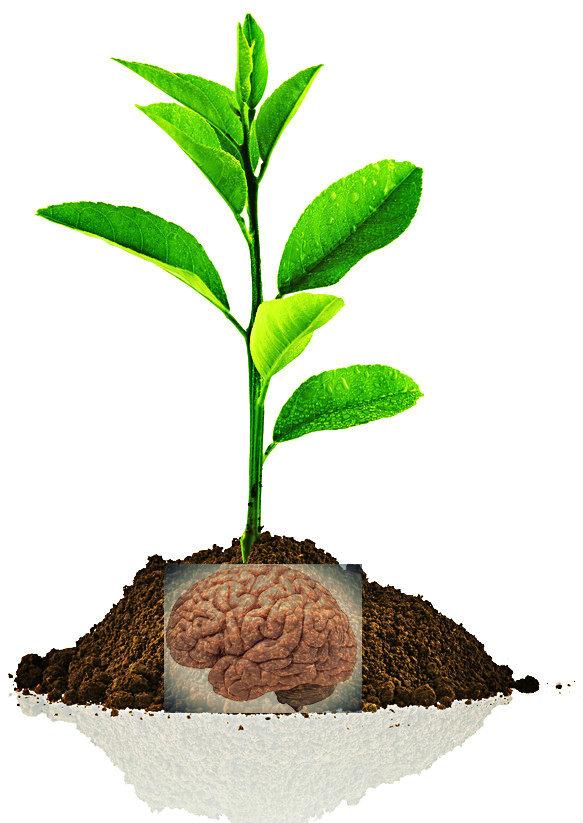 little plant.jpg